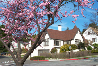 Thousand Oaks Neighborhood - Trees in bloom